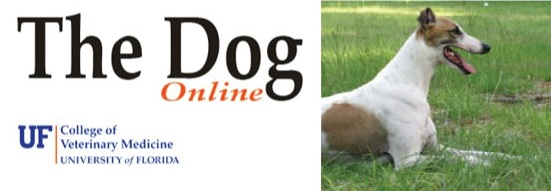 dog-class-website
