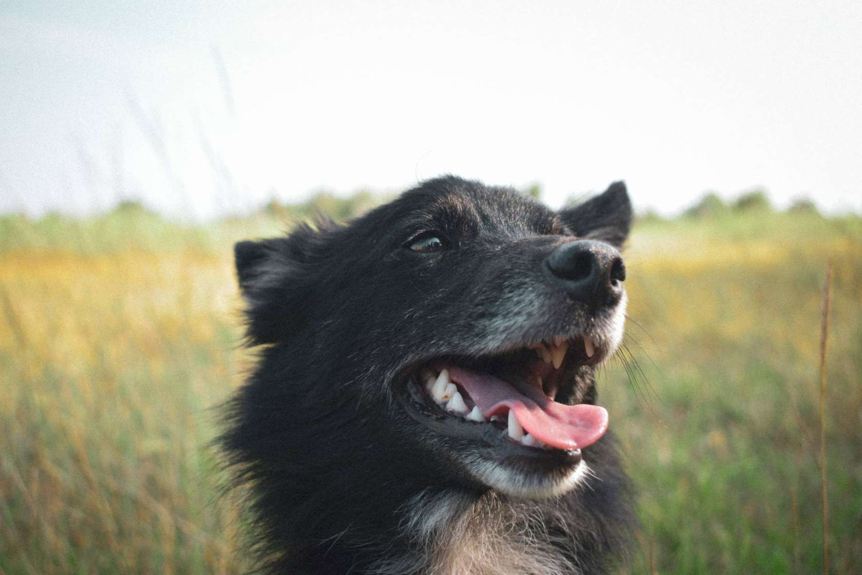 happy black dog