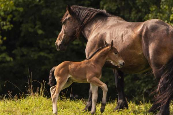 Foal and mare in a grassy field